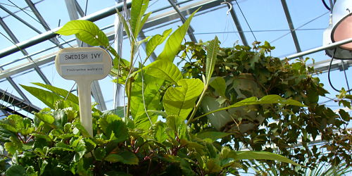 Bioscience Greenhouses